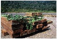 El comercio ilegal de madera por parte de la Unión Europea (UE) agota los bosques del mundo