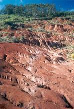 El Gobierno encarga a la ULL un estudio sobre desertización en el Archipiélago