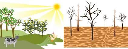 Por qué hay que reforestar ¡ya!