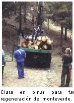 El Plan Forestal de Canarias