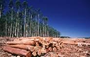 Diversas ONG alertan de la influencia humana en la desertización que afecta a 1.250 millones de personas