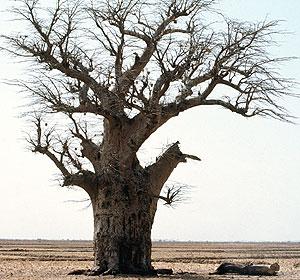 Más de 1.000 millones de personas están amenazadas por la desertificación en el mundo