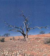 Desertificación en España: una perspectiva crítica