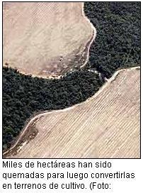 Brasil anuncia que se ha reducido la tala de árboles en la Amazonia