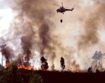 El PSOE del Cabildo de Gran Canaria rechaza el programa forestal de Medio Ambiente