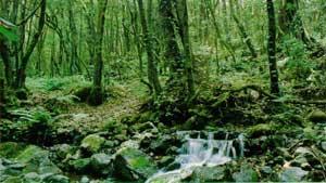 Ciudadanos para el bosque