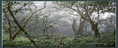 Bienvenidos al weblog <i>La Selva de Doramas</i>