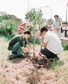 La política forestal y el viejo paradigma